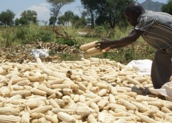 Maize prices decline in the region