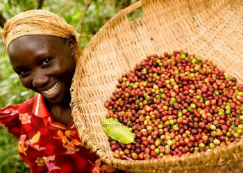 A woman displays a basket of coffee.