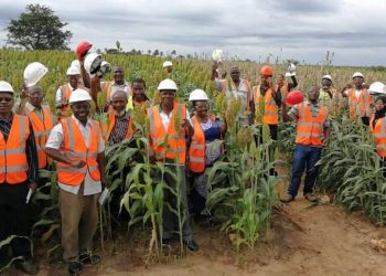 Sorghum farming in Kwale County supported by Base Titanium.