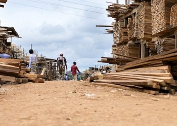 A timber yard in Cameroon. Kenya will host GLF in August boosting the country's timber industry. [Photo/CIFOR Forests News]