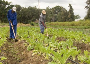 Tanzania's agricultural sector