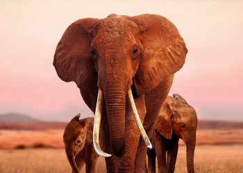 Last month, it was announced that Apple had acquired global rights to the Kenyan filmed documentary 'The Elephant Queen'-The Exchange