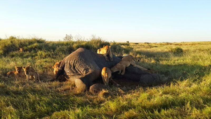 A concern has been raised after a disease claims eight jumbos in Tanzania. www.exchange.co.tz