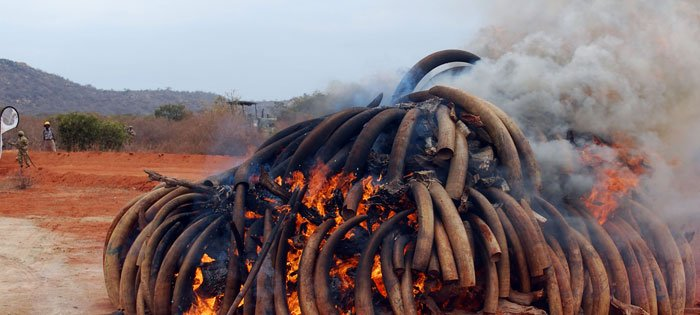 eBay and IFAW celebrate a decade-long ivory ban across the company platforms